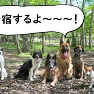 春のダメ犬合宿!申込受付中