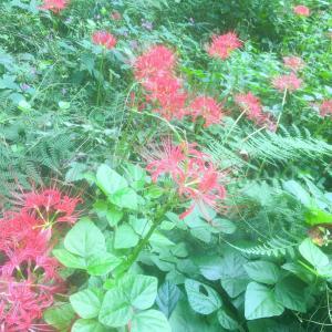 今日、都立桜ヶ丘公園へ。