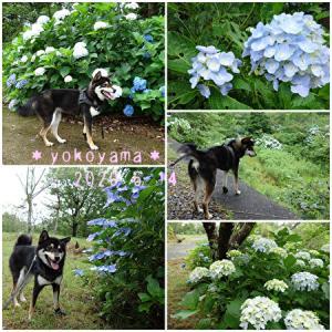 6月のお花見散歩・3