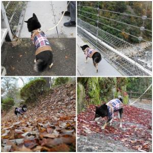 ちょこっと紅葉散歩~岩倉峡公園