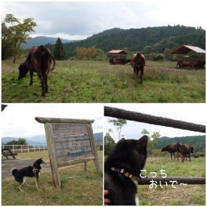 牛さんとこに、寄り道