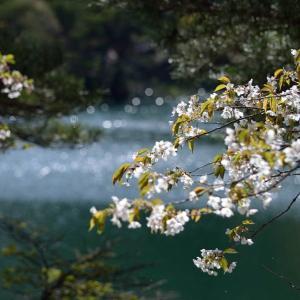 「忍ぶ川」と「少年賛歌」