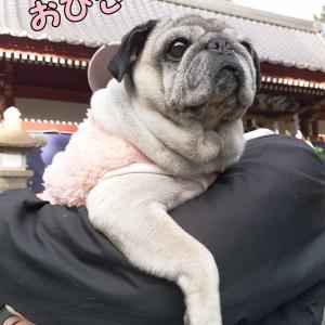 大吉の森ペンが愛犬石鹸でキモパグがヒョウ柄!!!!今回はそんな記事で~す(笑)by嫁子