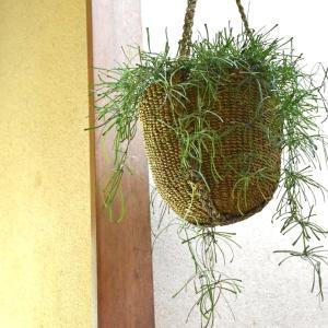ホヤレツーサと STEM の abaca basket