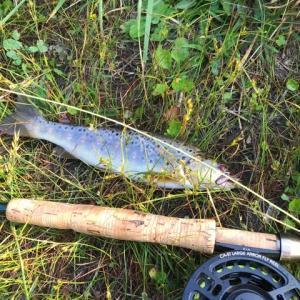 今朝の釣り