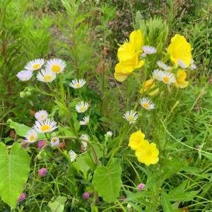 空き地に咲いて居る花