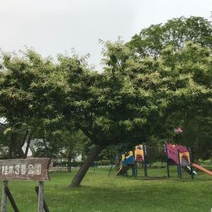 公園の・・・