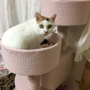 猫のユキちゃんに朝寝坊を怒られました