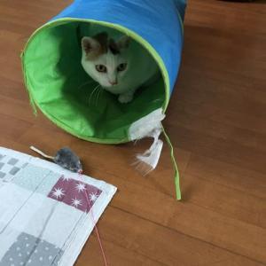 stayhome! 猫のユキちゃんの写真
