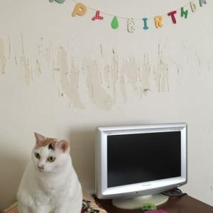猫のユキちゃん10歳になりました。