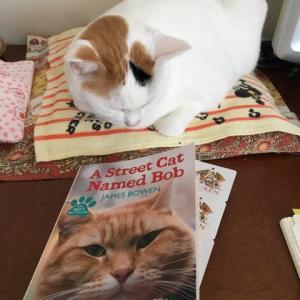 連休中はまた家にいます。猫のユキちゃんの写真