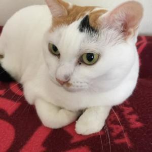 ネコのユキちゃんの写真