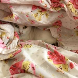 猫のユキちゃんの写真