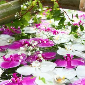 花手水の美しさ~小樽住吉神社