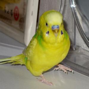 """【2122】換羽考 Thinking about """"molting"""""""