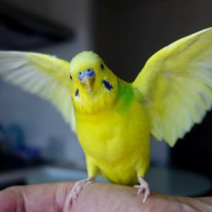 【2299】翼を広げて旅立つ主に…?