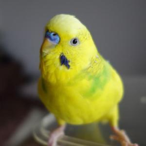 【2309】記録更新して対応する鳥、しない人