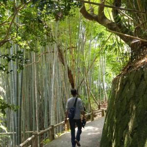 奈良県までお祈りに