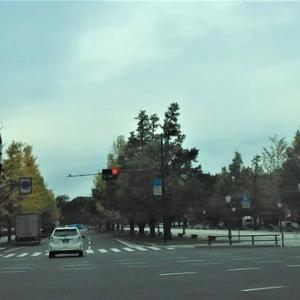 皇居周辺でも木々が色づき始めました・・・秋です