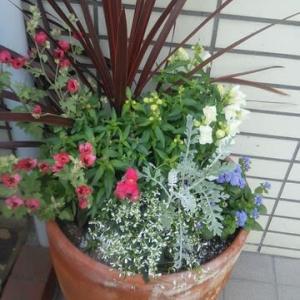 ゴールデンウィークに備えて・・・お花で明るく!!