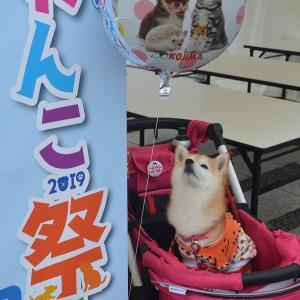 駒沢わんこ祭 予告編