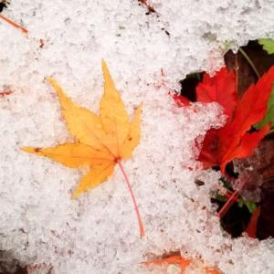 平地にも積雪