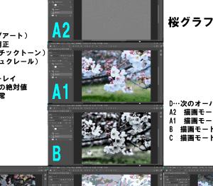 桜のグラフィック写真