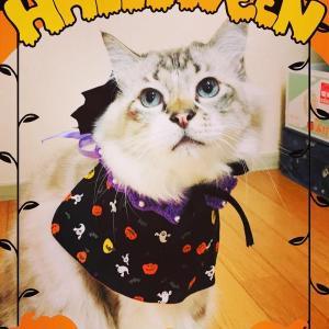 Happy Halloween ❣️