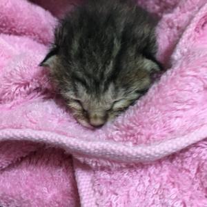 二か月後の保護猫