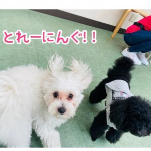 トレーニング〜森ノ宮〜