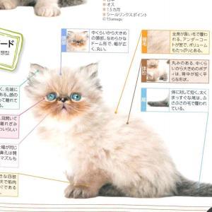 福丸 @猫のカタログ2021