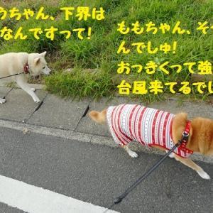 台風、あっちいけーー!