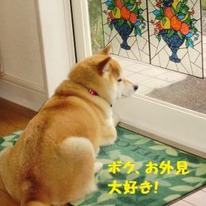 お外見好きなきゅう太郎