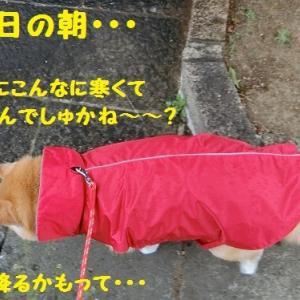 柴のだいちゃん ♪(/・ω・)/ ♪