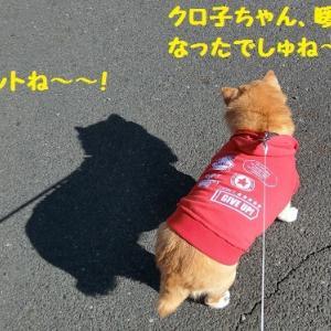 また柴のだいちゃん (*´∀`人 ♪