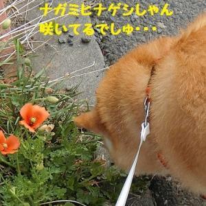 初めましてのナイキちゃん (^∇^)ノ