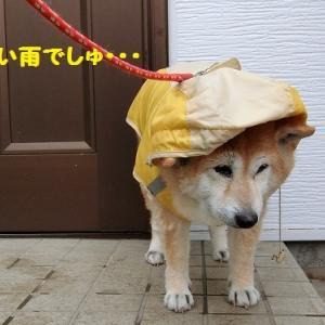 可愛いまるちゃん ヽ(≧∀≦)ノ