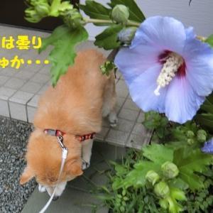 元気なまるちゃん (^∇^)ノ