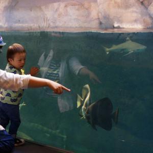 宮島水族館へ行く
