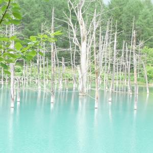 美瑛の碧い池 & 韓国の旅(板門店、他)