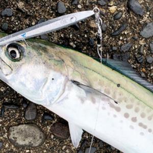 コルトスナイパー サゴシジグの紹介…明石の釣り@ブログ