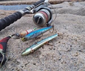 ◆タコ釣りそして、巡回パトロール…明石の釣り@ブログ