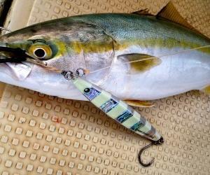 ◆考え過ぎ?魚の向きに違和感…明石の釣り@ブログ