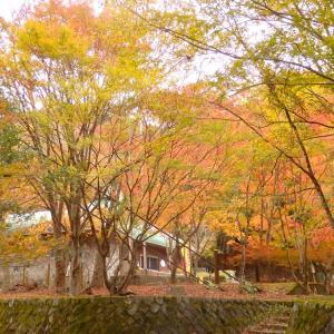 西丹沢の紅葉と滝と畦ヶ丸登山(前半・西丹沢ビジターセンターから滝めぐり)