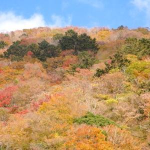 西丹沢の紅葉と滝と畦ヶ丸登山(後半・本棚分岐~畦ヶ丸~大滝沢)