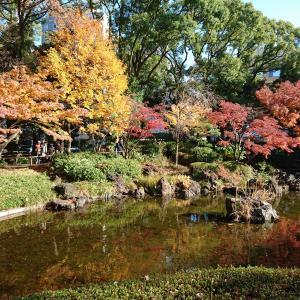 山下公園通りイチョウ並木と横浜公園の紅葉