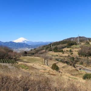 篠窪の春はまだでした(菜の花はまったくありません)(2月11日の様子)(大井町)