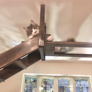 猫インテリアの研究