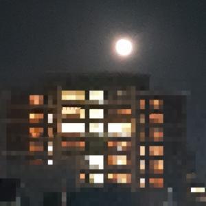 満月の夜  キタ━(゚∀゚)━!