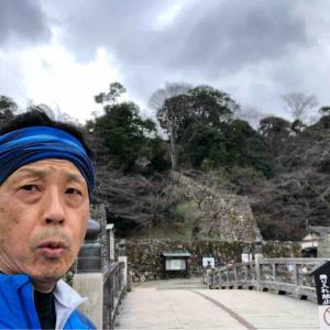 何か様子の違う彦根城をくるっとラン